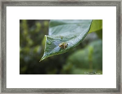 Morning Frog  Framed Print by Steven  Taylor