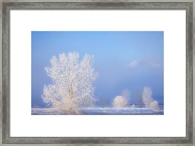 Morning Frost Framed Print by Darren  White