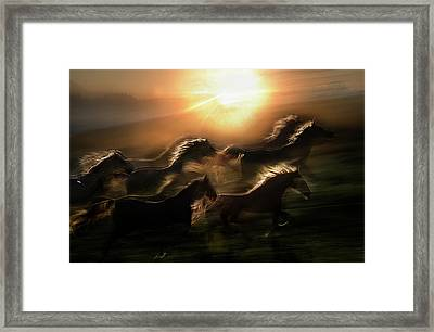 Morning  Gallop Framed Print