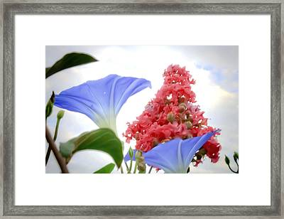 Morning Glories In The Garden Framed Print