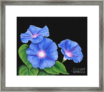 Morning Glories On Black Framed Print by Sarah Batalka
