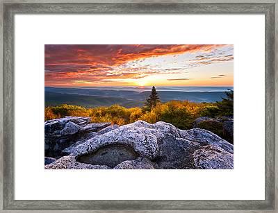 Morning Glory Framed Print by Bernard Chen