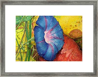 Morning Glory Bloom In Apples Framed Print