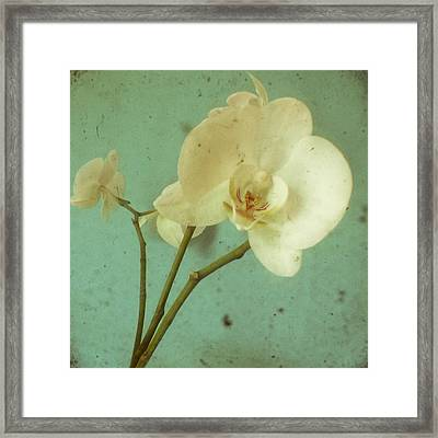 Morning Glory Framed Print by Cassia Beck