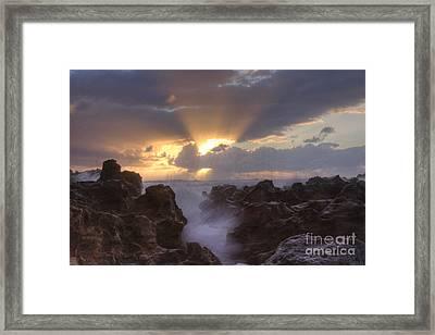 Morning Glory Framed Print by Darleen Stry