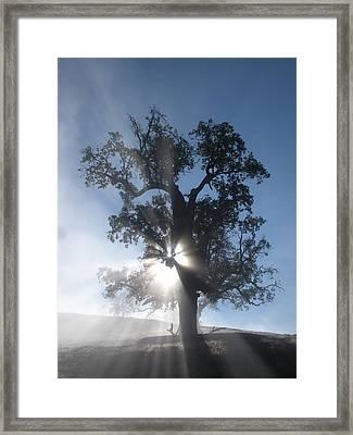 Morning Glory Framed Print