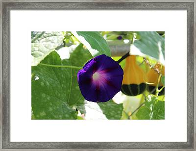 Framed Print featuring the photograph Morning Glory by John Mathews