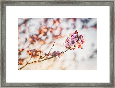 Framed Print featuring the photograph Morning Glory by Joshua Minso