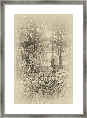 Morning Glory Framed Print by Margaret Palmer