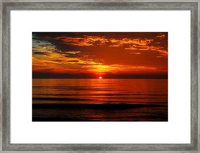Morning Glory Framed Print by Mim White