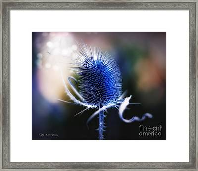 Morning Glory Framed Print by Mo T