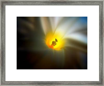 Morning Glory Framed Print by Nick Kloepping