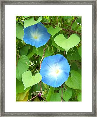 Morning Glory Framed Print by Noreen HaCohen