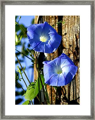 Morning Glory Pair Framed Print