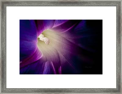 Morning Glory Purple Framed Print