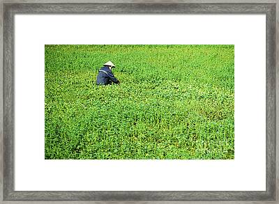 Morning Glory Framed Print by Rick Piper Photography