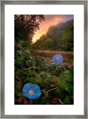 Morning Glory Framed Print by Robert Charity
