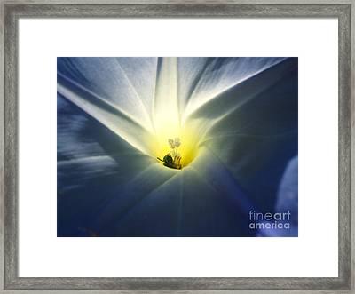 Morning Glory Visitor 2 Framed Print