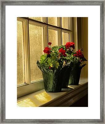 Morning Glow Framed Print by Boyd Alexander
