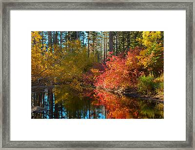 Morning Glow Framed Print