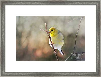 Morning Goldfinch - Digital Paint I Framed Print