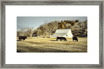 Morning Graze Framed Print