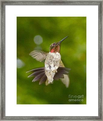 Framed Print featuring the photograph Morning Greeter by Alice Mainville