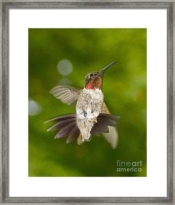 Framed Print featuring the photograph Morning Greeter II by Alice Mainville