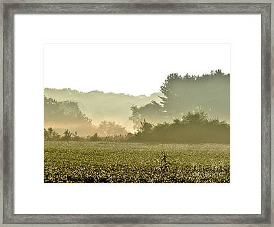 Morning Greys II Framed Print by Marilyn Smith