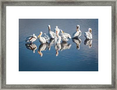 Morning Groom Framed Print by Jan Davies
