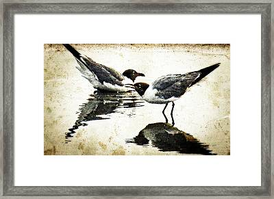 Morning Gulls - Seagull Art By Sharon Cummings Framed Print