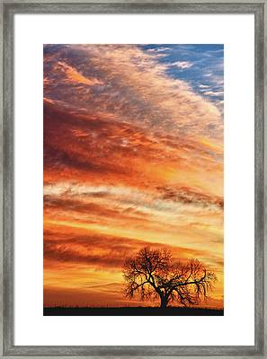 Morning Has Broken Framed Print by James BO  Insogna