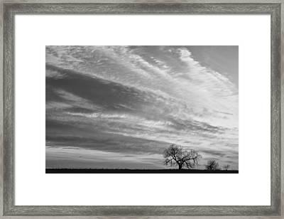 Morning Has Broken Three Trees Bw Framed Print by James BO  Insogna
