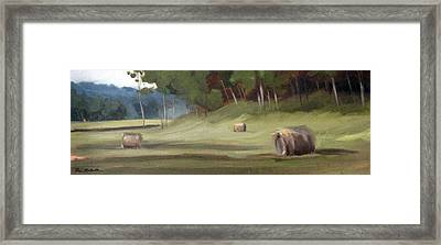 Morning Hay Framed Print by Erin Rickelton