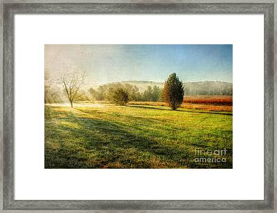Morning Haze Framed Print by Darren Fisher
