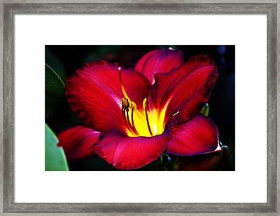 Morning Heat Framed Print