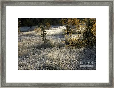 Morning Hoar Frost Framed Print