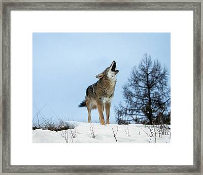 Framed Print featuring the photograph Morning Howl by Jack Bell