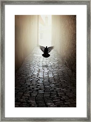 Morning Impression With A Dove Framed Print