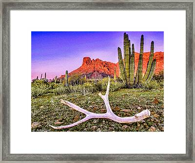 Morning In Organ Pipe Cactus National Monument Framed Print by Bob and Nadine Johnston