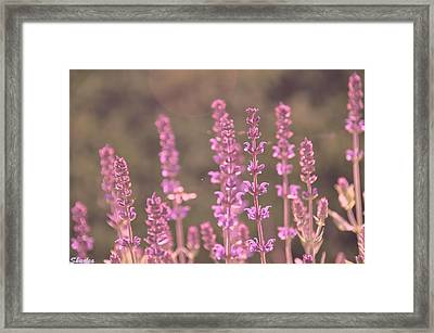 Morning In Pink Framed Print