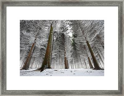 Morning In The Forest Framed Print