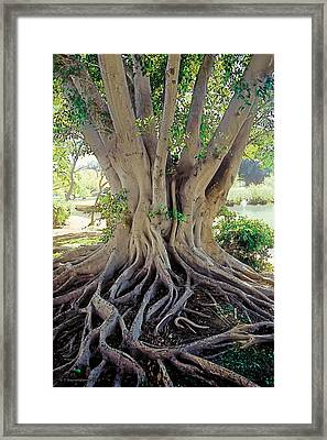 Morning In The Garden 2 Framed Print by Terry Reynoldson