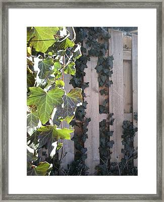 Morning Ivy Framed Print by Jaime Neo