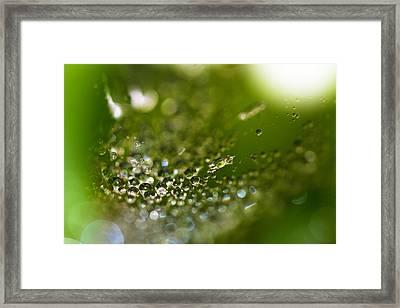 Morning Jewels Framed Print by Rebecca Cozart