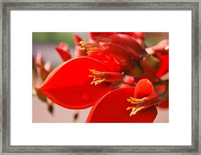 Framed Print featuring the photograph Morning Jog by Miguel Winterpacht