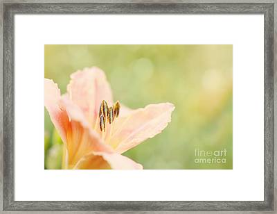 Morning Kisses Framed Print by Beve Brown-Clark Photography