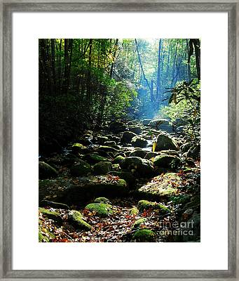 Morning Light 2 Framed Print