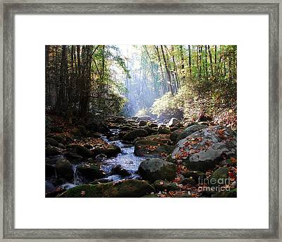Morning Light 3 Framed Print by Mel Steinhauer