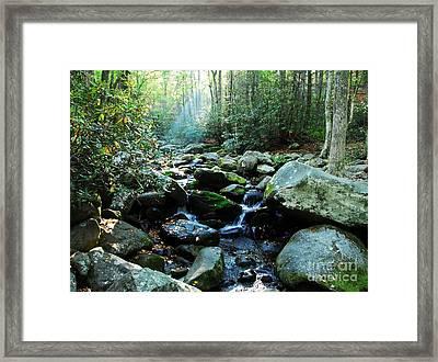 Morning Light 4 Framed Print by Mel Steinhauer